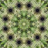 Mandala Rorrim 270220 005 Blacksun (RMX Mandala Virus 150220)